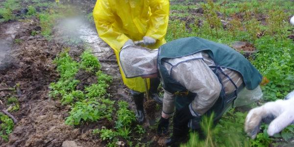 12 тысяч сеянцев ели высадили красноселы во Всероссийский День посадки леса